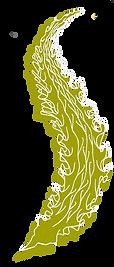 kombu algue brune bio.png