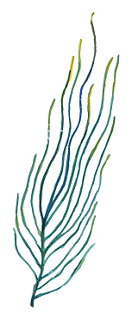 algue bleue et vert copie.png