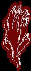 dulse algue rouge bio.png