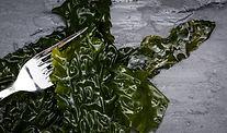 algues_algolesco_sacarine_mer