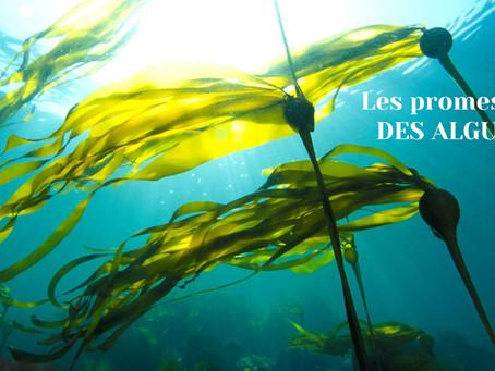 Les pouvoirs insoupçonnés des algues.