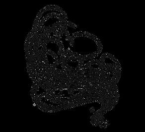 spaghettis de mer algue bio simple.png