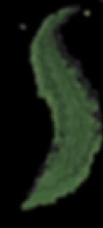 kombu_royal_iode_algue bio.png