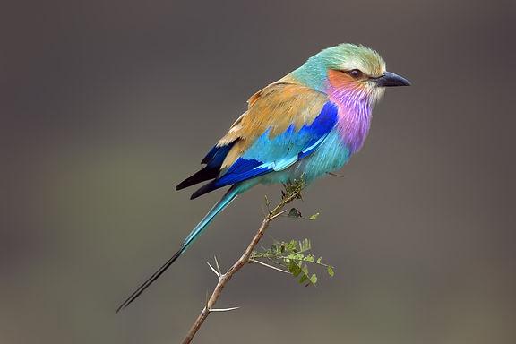 vogel creatief.jpg