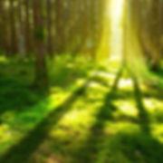 dreamstime_l_60626673_edited.jpg
