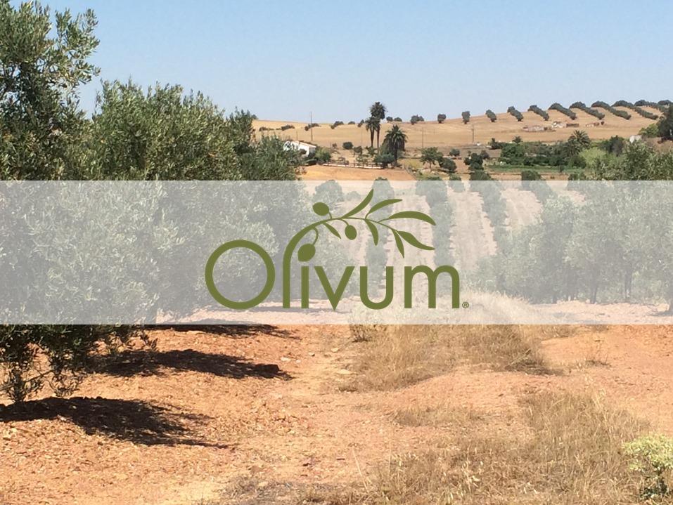 Olival_FB_Site