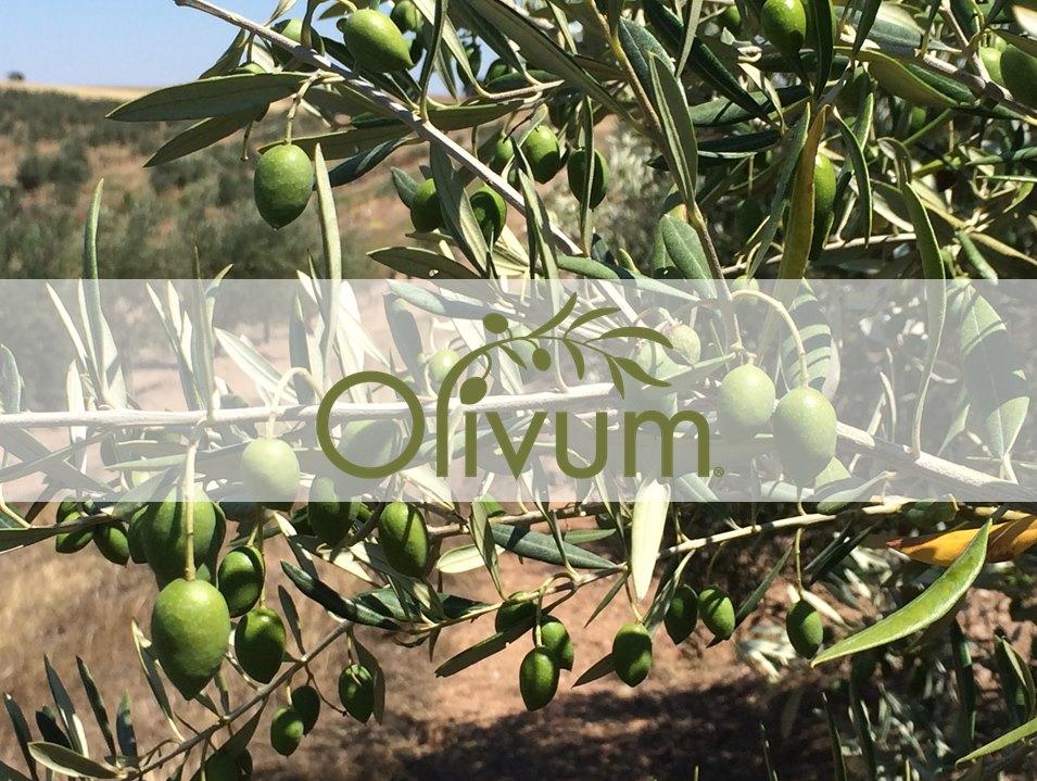 oliveira_FB_Site
