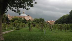 Le piante e i contadini vanno in letargo