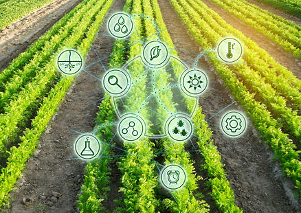 Growing organic vegetables with new tech