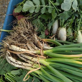 みがく農場の採れたて野菜たち