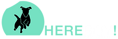 Here Boy Logo - Header - No BG[1].png