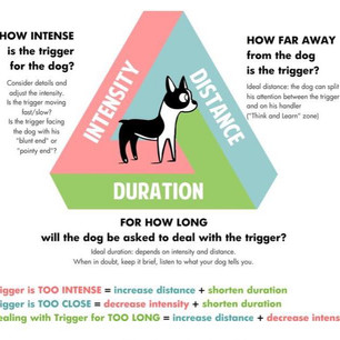 Assessing Your Dogs Triggers