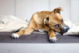 Rescue Puppy_edited.jpg