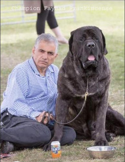 Frank Best of Breed - East of England