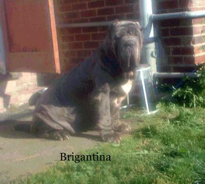 Brigantina