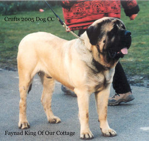 King of Our Cottage