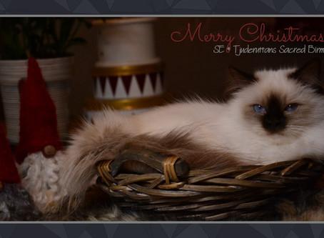 God Jul, Gott Nytt År och god fortsättning!
