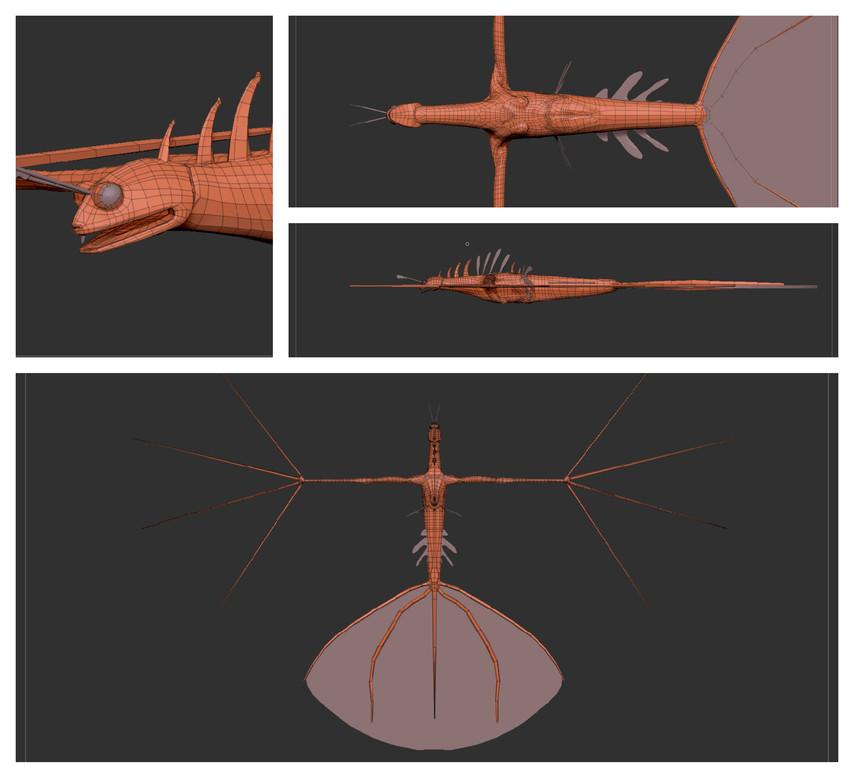 Pteoris Stirata - Topology