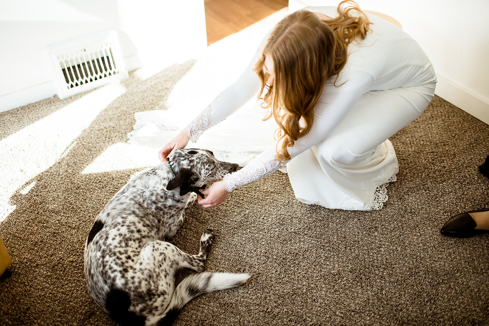 bride adjusting the bow tie on her dog's collar