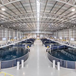MainStream Aquaculture Farm Pano.jpg