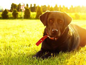 Fundación MIA, el camino hacia la adopción de perros