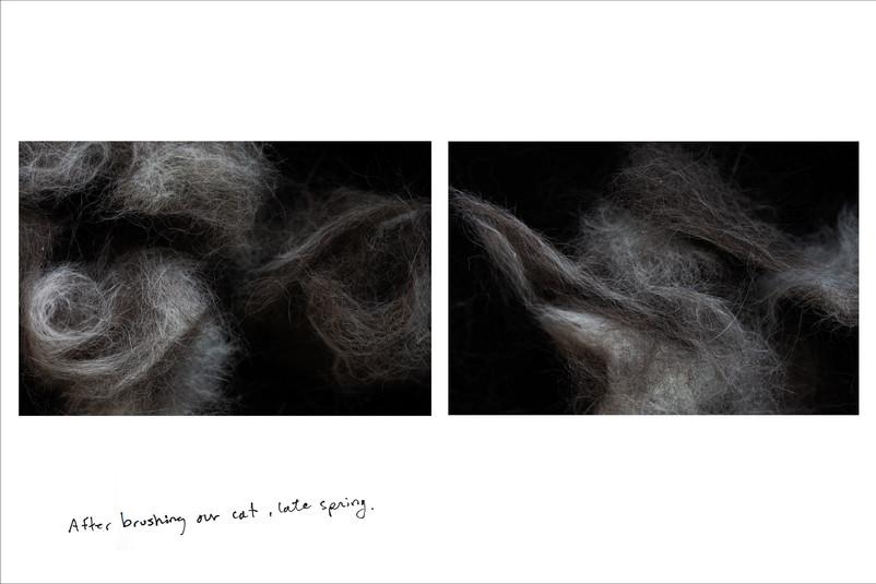 layout_Flying_Fur.jpg