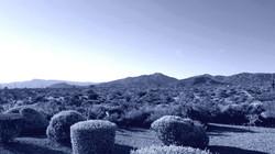 Scottsdale North Landscape