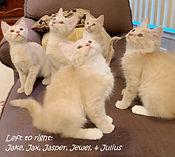 IMG_1185 crop all kittens names.jpg