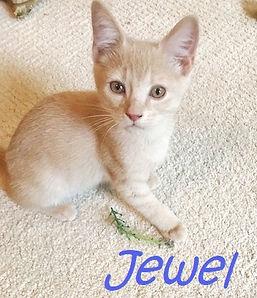IMG_7272 crop Jewel name.jpg