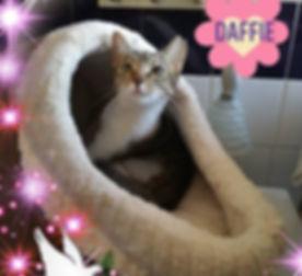 Daffie.jpg