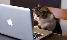 cat-videos-300x182.jpg