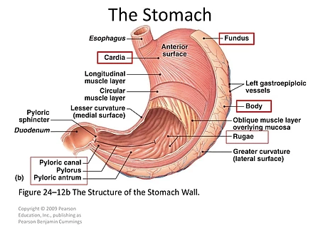 Stress, Stomach, Your Spine and the Link Between Them