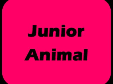 Jr Animal Race Day Fee