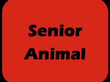 Sr Animal Race Day Fee