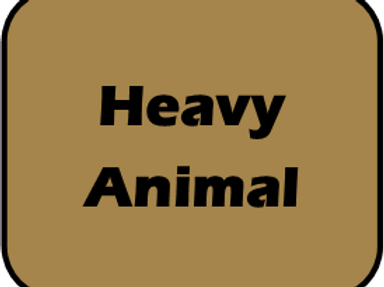 Hvy Animal Race Day Fee