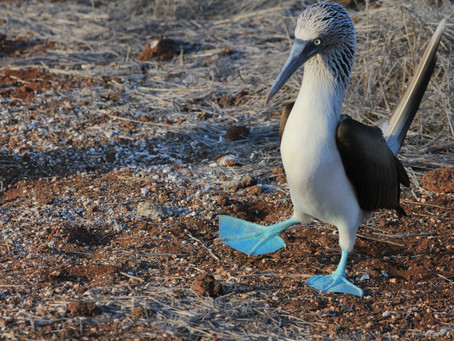 Is the Galapagos on your bucket list?