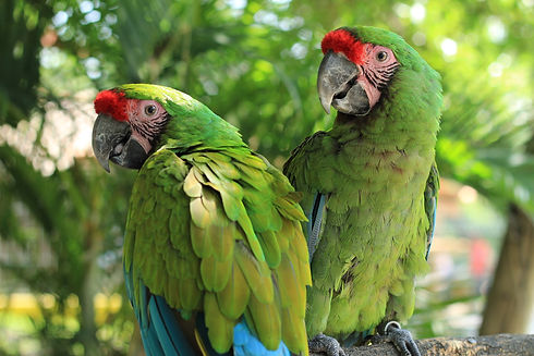parrot-2659023_1920.jpg