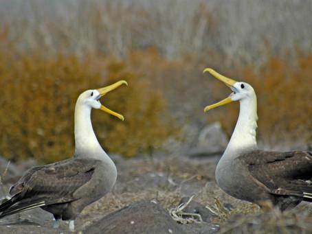 Galapagos Photo Journal