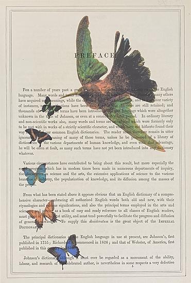 Hummingbird (Preface)