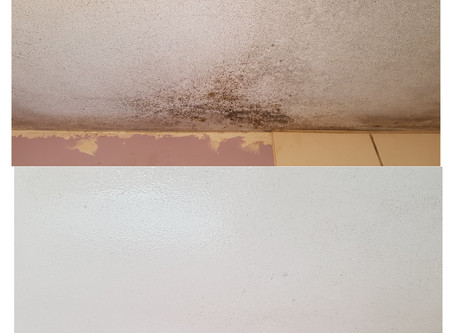 Mould Removal Services in Telford | Shrewsbury | Wolverhampton