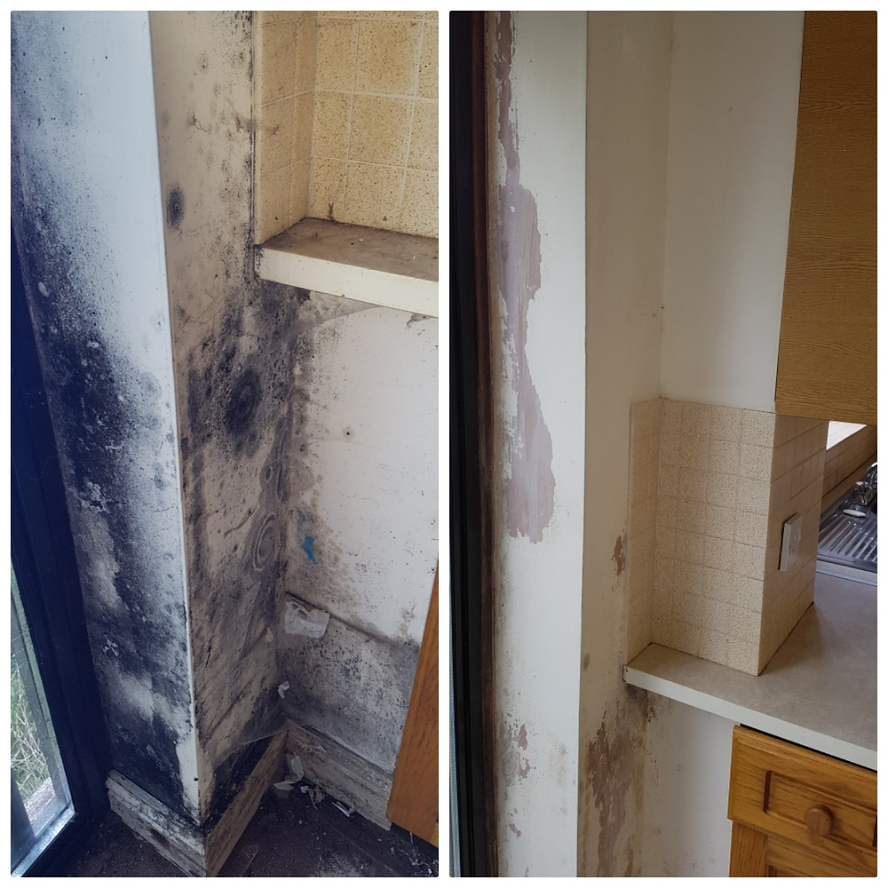 Shropshire Expert Cleaners offers expert mould removal in Telford, Shrewsbury & Wolverhampton