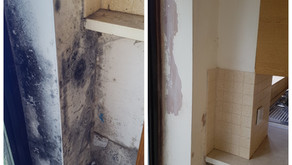 Expert Mould Removal