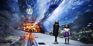 Dubai Family Vacation
