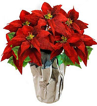red-poinsettia.jpg
