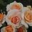 Thumbnail: Sweet Honey (floribunda)