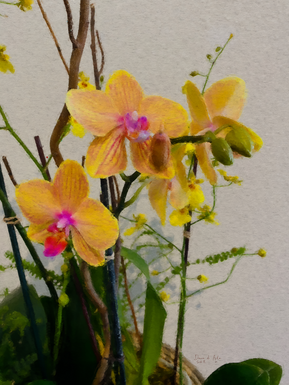 Yellow Selby Orchids