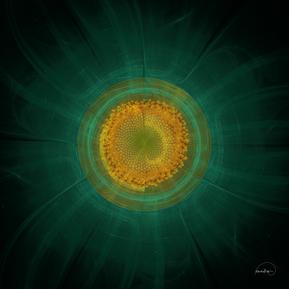 Fractal Sunflower