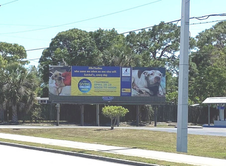 Donated Graphic Design Work for Satchel's Last Resort and a Billboard!
