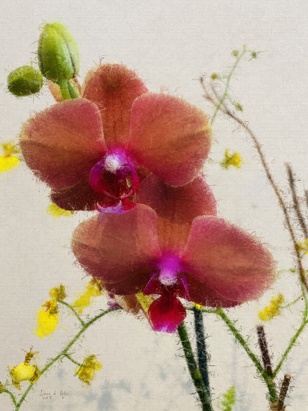 Selby Orchids