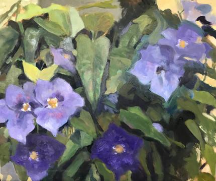 Orlando's Flowers